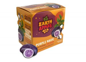 Earth Apples Seed Potatoes - Purple Magic